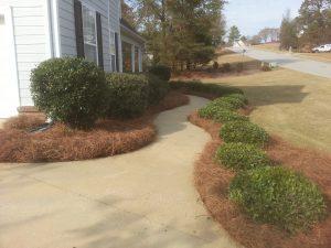 Dalmatian Lawn Amp Landscape Serving Auburn Opelika